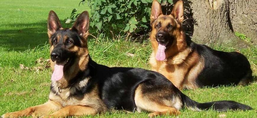 Организация охраны объектов с собаками